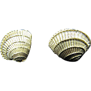 Napier Sea Shell Clip Ons