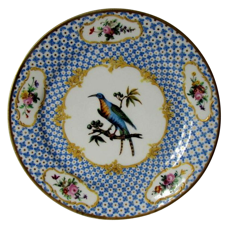 Antique Ornithological Plate, Hand Painted Blue Exotic Bird, Raised Gold, Early 19th C Porcelain