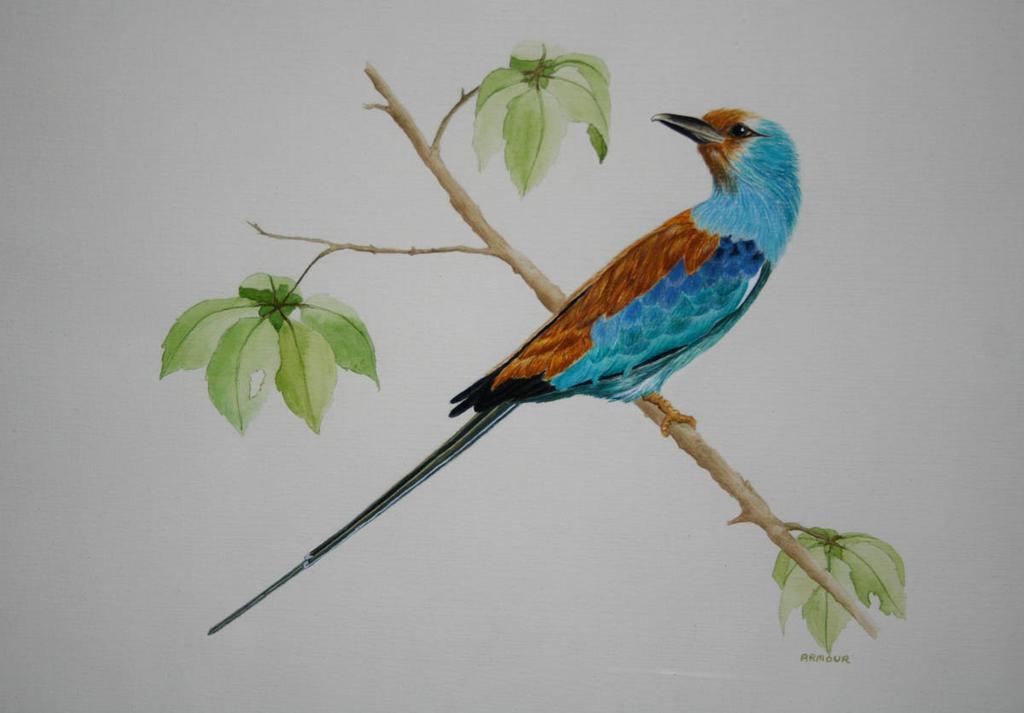 Framed Bird Watercolor