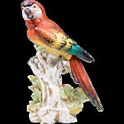 German Dresden Porcelain Figurine of Macaw Parrot