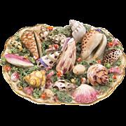 Rare 1810 Chamberlain Worcester Specimen Sea Shell Dish