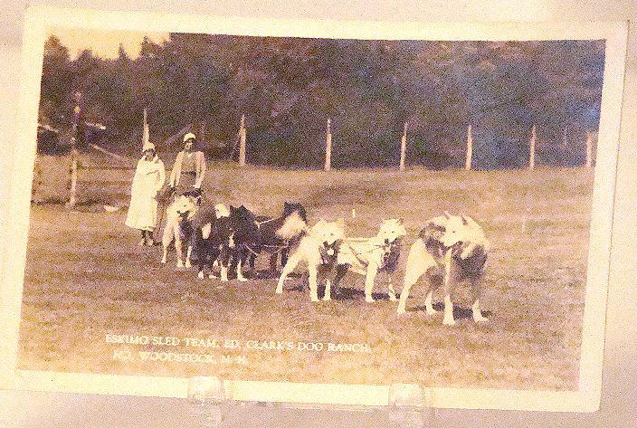 Vintage Eskimo Sled Team Ed Clark's Dog Ranch Woodstock N. H. Postcard