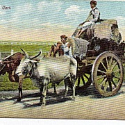 Early 1900s Black Americana Postcard A Cotton Cart