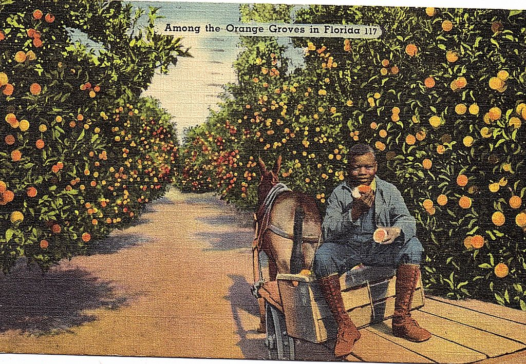 1940 Very Colorful Linen Black Americana Postcard Among The Orange Groves In Florida