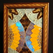 Antique Butterfly Wing Art Box: Inlaid: Brazil: Early 1900's