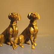 Pair of Bronze Sitting Hounds - Edwardian