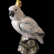 Vintage Cockatoo - Shafford Bird Collection