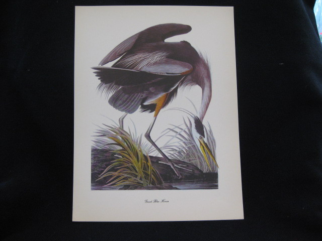 Vintage Audubon Great Blue Heron Print