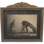 Antique large framed photograph of a Cat photographer with box camera