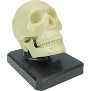 "Vintage figural skull with moveable jaw desk display ""Ivorine Dentoform Corp New York"""