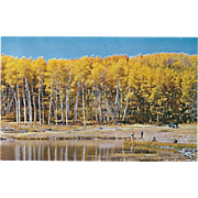 One of Many Fishing Spots near Raton NM New Mexico Vintage Postcard