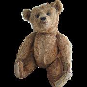 "Antique Cinnamon Steiff 16"" Bear, Loved Cecil"