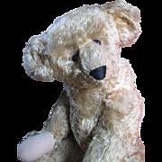 "Huge Antique Ideal 21"" American Bear"
