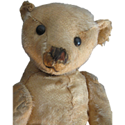 "Antique 16"" Beige Steiff Bear, Blank Button, Loved"