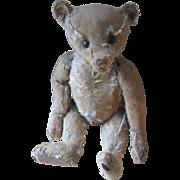"""Antique Steiff 16"""" Bear, Loved Birdie"""