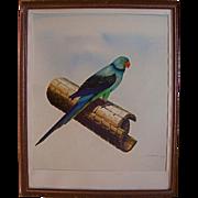 1970's Original Oil Painting Bird Parakeet Fine Art