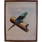 1970's Original Oil Painting Bird Parakeet Fine Art