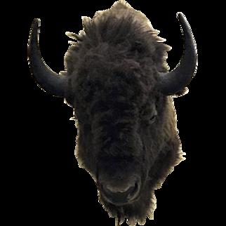 Vintage Buffalo Head Taxidermy Mount Ranch