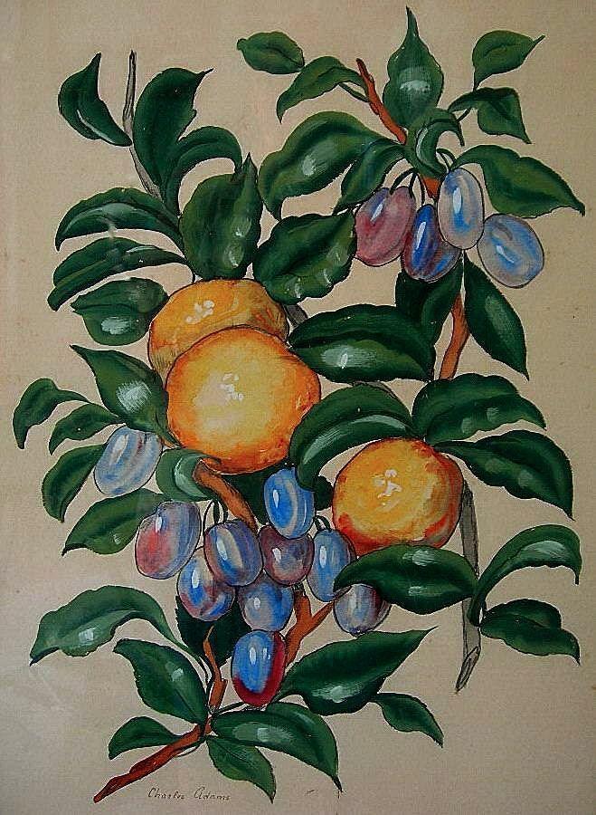 19th Century Still Life Botanicals by Charles Adams