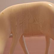 Possible Ivory gazelle