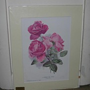 Hybrid Tea Rose Lithograph by Collingridges, Victorian
