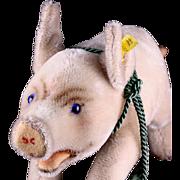 Rare Big Sister Steiff Postwar Mohair Jolanthe Pig 2 IDs Beautiful Blue Glass Eyes