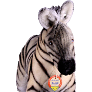 Rare Majestic and Sweet Steiff LARGE Young Zebra Colt 2 IDs