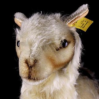 Earliest Model Rare Steiff Middle Sister Llama Lama Gorgeous Coloring 2 IDs