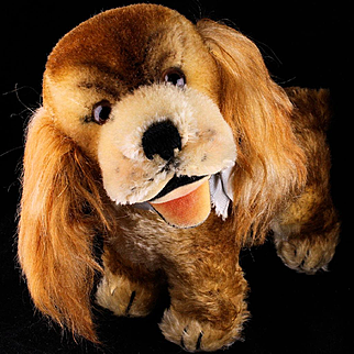 Middle Sister Rare Steiff Early Post WWII Model Gold Cockie Cocker Spaniel Puppy Dog w Happy Open Mouth 2 IDs Plus US-Zone Flag