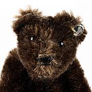 Rare Tiniest Brother Steiff (Dark!) Brown 5xJointed Original Teddy Bear ID