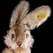Rare Largest Size 5xJointed Steiff Niki Hase Bunny Rabbit 2 IDs TALKS!
