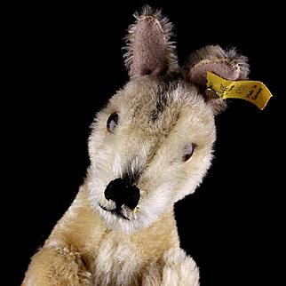 Rare Earliest Model MALE Steiff Kangoo Kangaroo (no pouch) Jointed Head and Arms 2 IDs