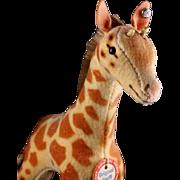 Steiff '50s/'60s Baby Brother Velveteen Giraffe 2 IDs
