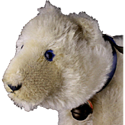 Middle Brother Rare Early Steiff Eisbaer Polar Bear Beautiful Blue Glass Eyes ID