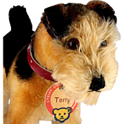 Rare Early Post-WWII Handsome Steiff Terry Airedale Terrier Dog 2 IDs plus Us-Zone Flag Older Shape Bear Face Red-Brown Print Chest Tag