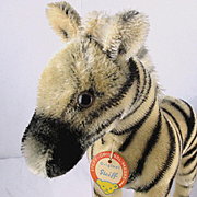 Rare Handsome and Sweet Steiff Next to Largest Young Zebra Brother ID