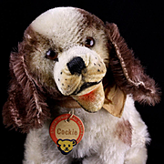 Rare Early Post WWII Steiff Baby Sister Seated Brown and White Cockie Cocker Spaniel Puppy Dog RED-printed Chest Tag