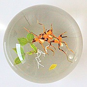 Paul Stankard Limited Edition Spider Orchid Paperweight