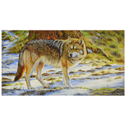 Timber Wolf Miniature Oil Painting by Beverly Abbott