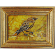 Yellow-rumped Warbler on Forsythia Branch-Miniature Oil Painting by Beverly Abbott