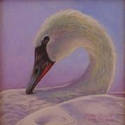 Sweet Swan (Mute Swan)