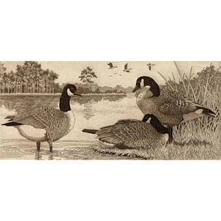 Trio, Original Etching of Canadian Geese by Listed Artist, David Hunter