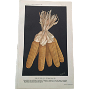 Antique Wisconsin Ears of Corn Chromolithograph Print