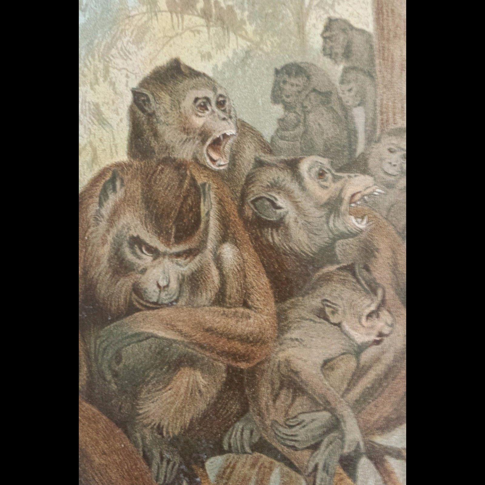 1890's Brehm Chromolithograph - Makak - Macaque Monkeys