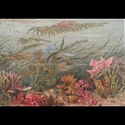 "1890""s Meyer's  ALGAE / SEAWEED / SHARK Marine Life Chromolithograph Print"