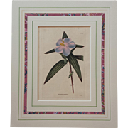 19th Century Botanical Print in French Mat by George Cooke