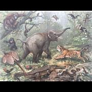 1890's Meyer's ORIENTALISCHE FAUNA Chromolithograph Print - Tiger , Elephant, Orangutan