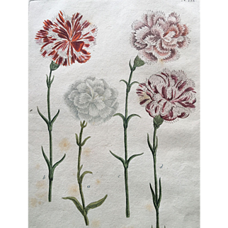 18th Century Weinmann Hand Colored Copper Plate Engraving of Carnations