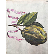 Antique Ferrari Botanical Lemon Citrus Fruit Print