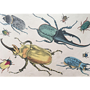 19th Century Oliver Goldsmith Beetles / Insects Engraving